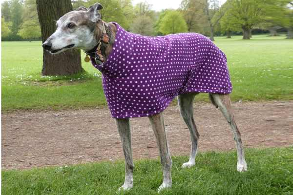 Greyhound Lurcher Whippet Fleece Coat in Purple Spot
