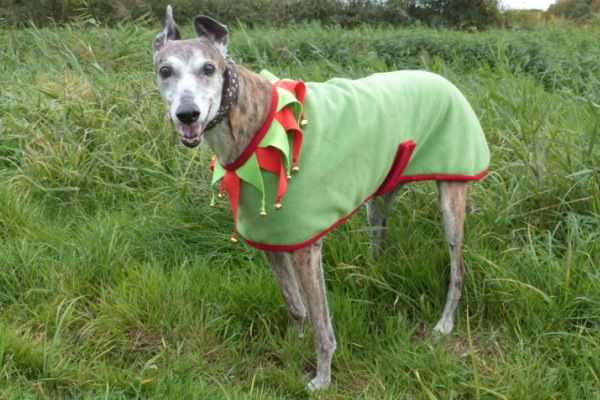 christmas elf coat for greyhounds lurchers whippets