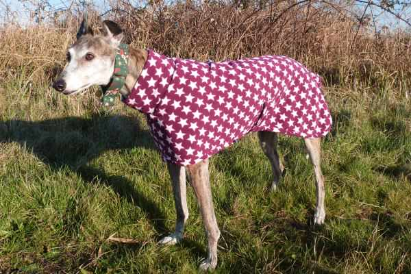 Greyhound Lurcher and Whippet Fleece Coat in Very Berry Star design