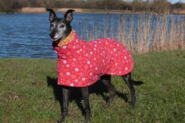 greyhound fleece coat in snowflake design
