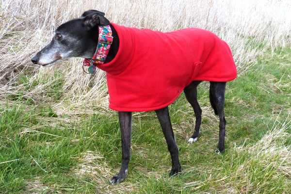greyhound fleece coat bright red