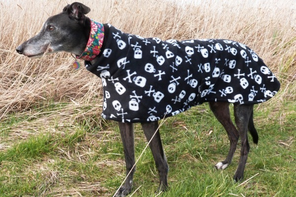Greyhound Lurcher and Whippet Fleece Coat in Skulls and Bones Fabric from Milgi Coats