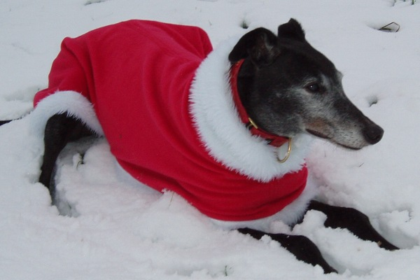 Greyhound Christmas Fleece Coat from Milgi Coats