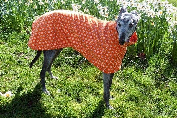 Greyhound Lurcher and Whippet Fleece Coat in Cosmic Orange Fabric from Milgi Coats