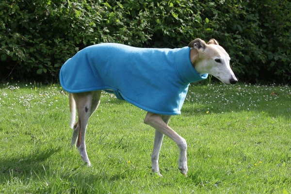 greyhound whippet lurcher fleece coat in turquoise