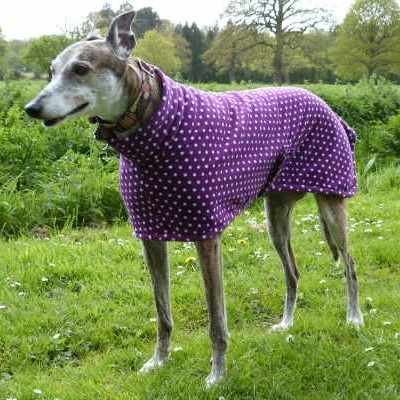 new zealand Greyhound Coats Fleece In Purple Spot